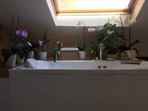Pesciolini e orchidee a bordo vasca