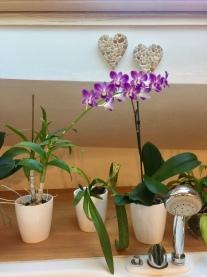 Cuori e orchidee